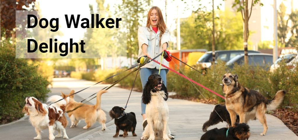 dog walker business insurance